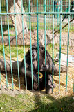 Schimpanse im Zoo Stockbilder