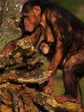 Schimpanse mit einem Kind auf ihrem Bauch Lizenzfreies Stockfoto
