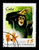 Schimpanse-Pan-Höhlenbewohner, Hand und Fuß, Entwicklung des Schimpanse serie, circa 1998 Lizenzfreie Stockfotos