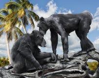 Zwei Affen Stockfotografie