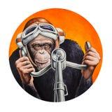Schimpansepilot Stockbild