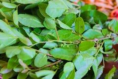 Schinus terebinthifolius Brazilian Pepper-tree with papaya salad Royalty Free Stock Images