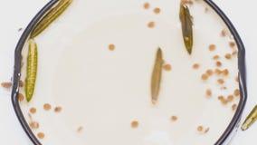Schioccare del baccello e del seme della radice di Minnie video d archivio