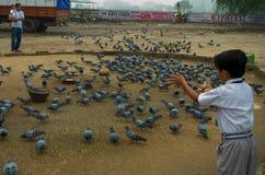 Schiooljongen het voeden aan vogels Royalty-vrije Stock Foto's
