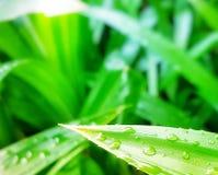Schirmserveranlagen und -bäume lizenzfreies stockbild