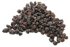 Schisandra莓果03 库存图片