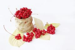Schisandra berries and leaves isolated on the white. Crop of red fruits royalty free stock photos