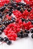 Schisandra chinensis or five-flavor berry. Aronia or chokeberry. Fresh red and black ripe berry on white royalty free stock photography