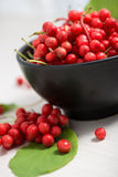 Schisandra chinensis Fruit and Berries. Schisandra chinensis or five flavor berry stock image