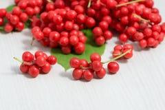 Schisandra chinensis Fruit en Bessen Stock Foto