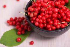 Schisandra chinensis frukt och bär Royaltyfri Bild