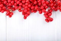 Schisandra chinensis o bacca di cinque-sapore immagini stock