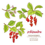 Schisandra vector set Royalty Free Stock Photos