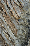 Schist Royalty Free Stock Images