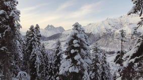 Schitterend de winterlandschap van sneeuw afgedekte pijnboombomen en prachtige bergen stock video