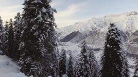 Schitterend de winterlandschap van vorsthout met pijnboombomen en mooie bergen stock footage
