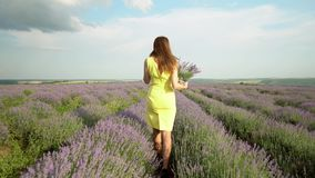 Schitterend Meisje op Lavendelgebied stock video