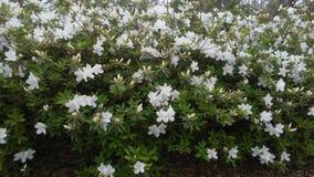 Schitterende Bloemen Stock Afbeelding