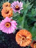 Schitterende Bloemen royalty-vrije stock afbeeldingen