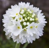 Schitterende bos van witte bloemen Royalty-vrije Stock Foto's