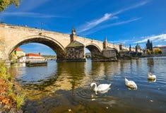 Schitterende bottom-up mening bij oud Charles Bridge, Vltava-rivier en de troep van zwanen Stock Afbeeldingen