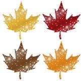 Schitterende Esdoornbladeren Royalty-vrije Stock Afbeeldingen