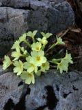 Schitterende gele bloemen Royalty-vrije Stock Fotografie