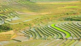 schitterende landbouwbedrijfgebieden, padieveldterrassen, Sapa, Vietnam