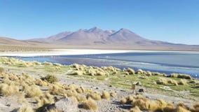 Schitterende landschappen van Sur Lipez, Zuid-Bolivië stock videobeelden