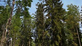 Schitterende mening over aardlandschap op de zomerdag Boslandschap met groene bomen, struiken, installaties op blauwe hemelachter stock footage
