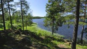 Schitterende mening over meer door lange bomen De schitterende achtergrond van het aardlandschap Zweden, stock videobeelden