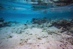 Schitterende mening van onderwaterwereld snorkeling De Maldiven, Indische Oceaan Dode ertsaderkoralen en mooie vissen in blauw wa royalty-vrije stock foto's