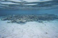 Schitterende mening van onderwaterwereld snorkeling Dode ertsaderkoralen en mooie vissen in blauw water stock foto