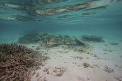 Schitterende mening van onderwaterwereld snorkeling Indische Oceaan Dode ertsaderkoralen en mooie vissen in blauw water royalty-vrije stock afbeeldingen