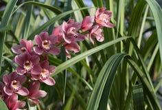 Schitterende roze orchideeën in groen gras met natuurlijk licht stock foto