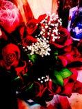 Schitterende rozen Stock Afbeelding