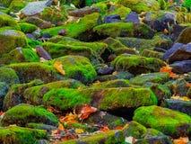 Schitterende verbazende close-upmening van vele die stenen met mooi groen rendiermos worden behandeld, achtergrond Stock Fotografie