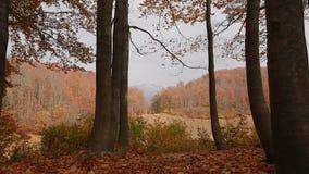 Schitterende view ag de herfstdaling op Bolshoe-meer in Kaukasische reserve Khmelevsky stock videobeelden
