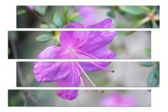 Schitterende Violet Flower Art stock foto