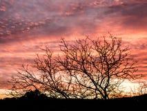 Schitterende zonsondergang met roze aangestoken wolken stock foto's