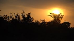 Schitterende zonsopgang in Afrika, Safari, Ethiopië stock video