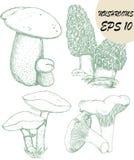 Schizzi dei funghi immagini stock