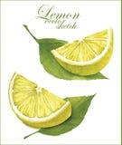 Schizzi del limone Immagine Stock Libera da Diritti