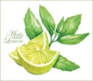 Schizzi della menta e del limone Fotografia Stock Libera da Diritti
