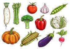 Schizzi della verdura fresca per progettazione di tema dell'alimento Fotografia Stock