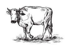 Schizzi delle mucche disegnate a mano Immagine Stock