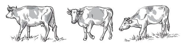Schizzi delle mucche disegnate a mano Fotografie Stock Libere da Diritti