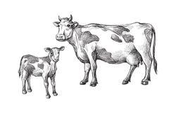 Schizzi delle mucche e del vitello disegnati a mano bestiame bestiami pascolo animale Immagine Stock Libera da Diritti