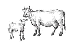 Schizzi delle mucche e del vitello disegnati a mano bestiame bestiami pascolo animale Fotografie Stock