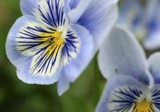 Schizzi di estate della flora e della fauna immagini stock